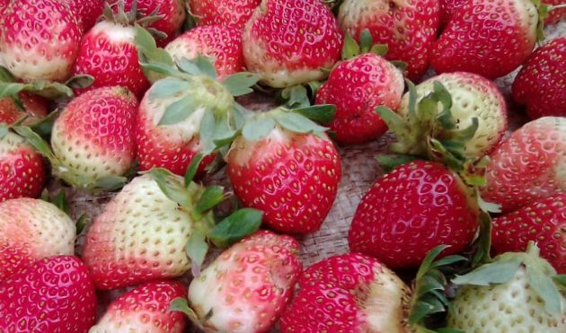 Farmers Market Kenya | Our aim as Farmers Market Kenya is to